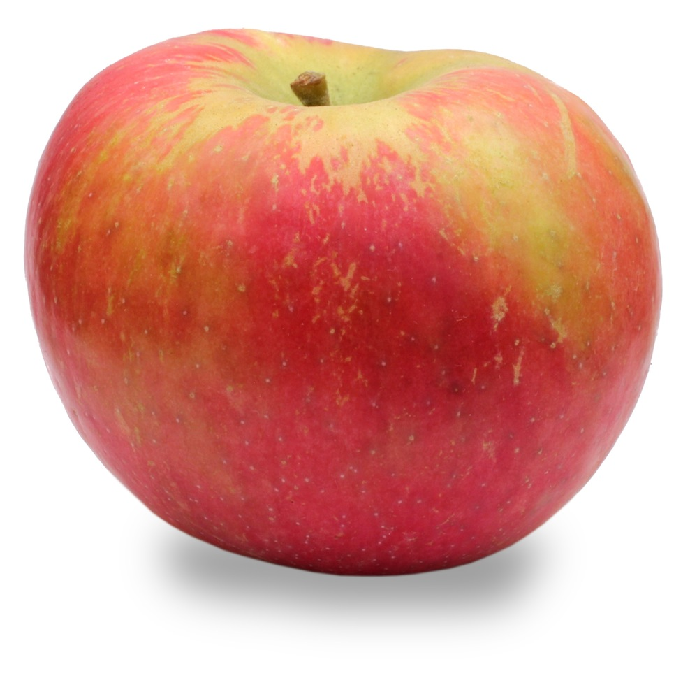 Honeycrisp apples are the king of crunch! This gourmet apple is sweet ...