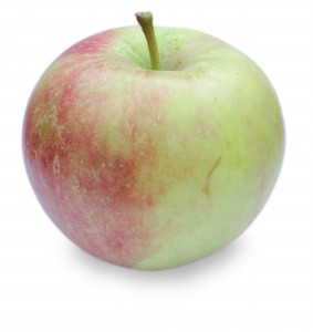 Stayman Winesap Apple