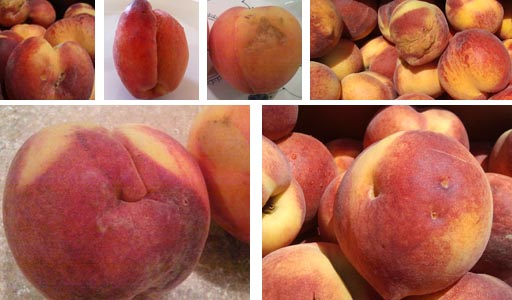 Number 2 Peach Collage