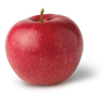 apple food. rome apple food i