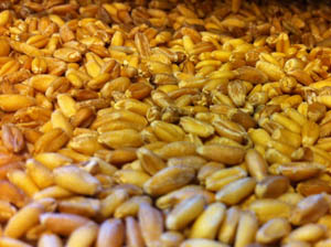 Dried Wheat Sprouts