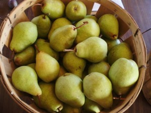 Bartlett Pears from 2011