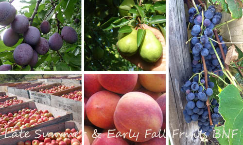 Late Summer and Early Fall Fruits 2013