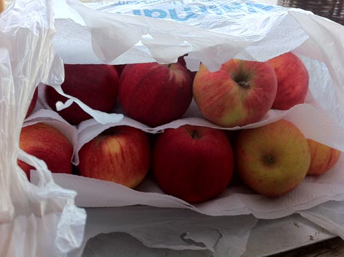Cameo Apples In Bag For Storage
