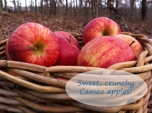 Fresh Cameo Apples in Basket