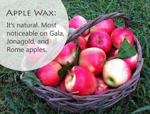 Apple Wax