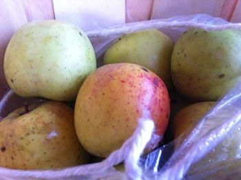 Gold Rush Apples 2013