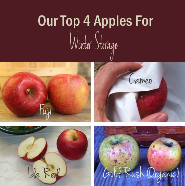 Cameo, Fuji, Ida Red, and Gold Rush Apples - Our Best Winter Keepers