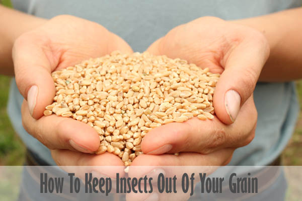 How To Keep Insects Out Of Your Grain