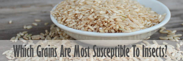 Which Grains Are Most Susceptible To Insects