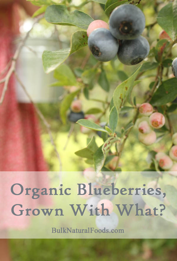 Organic Blueberries Grown With What