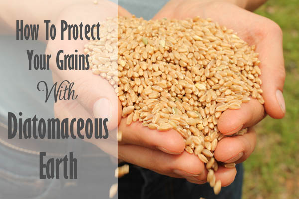 How To Protect Your Grains With Diatomaceous Earth