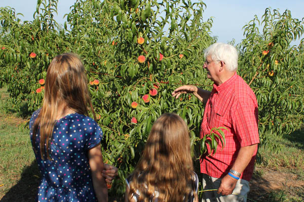 Family Tour of Peach Orchard